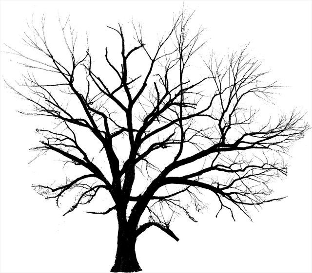 Line Drawing Of Tree : Line drawings of trees clipart best