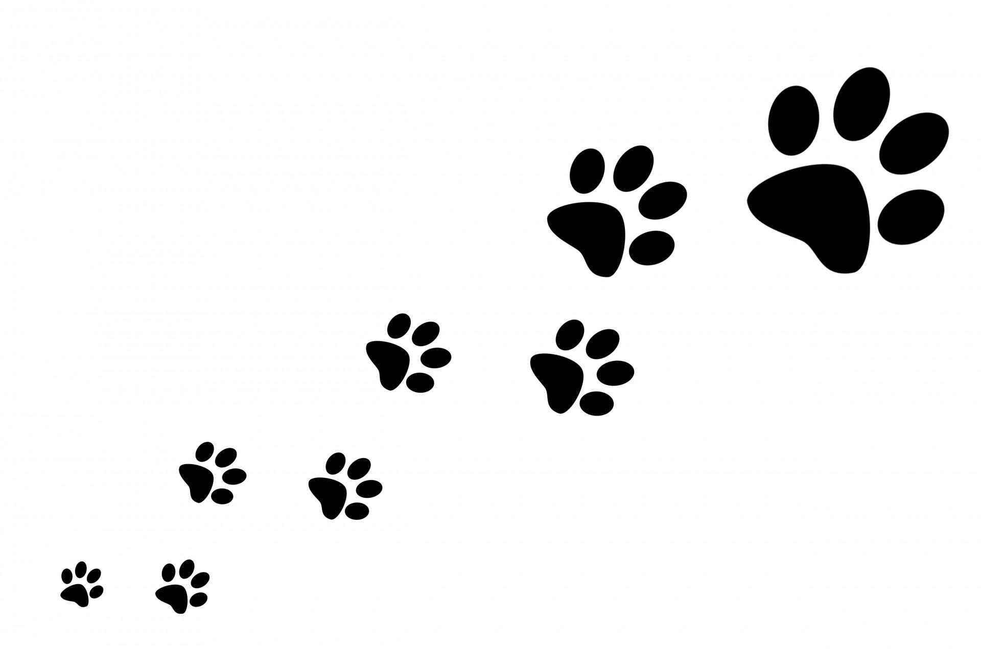 Dog paw prints backgrounds