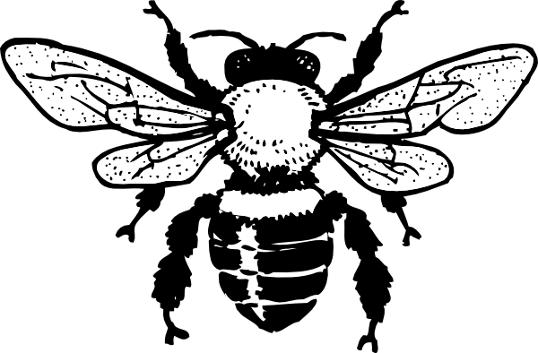 Line Art Bee : Bee line drawing clipart best