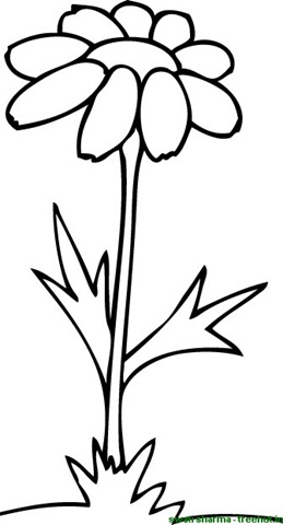 Colouring Pages Of A Single Flower Clipart Best