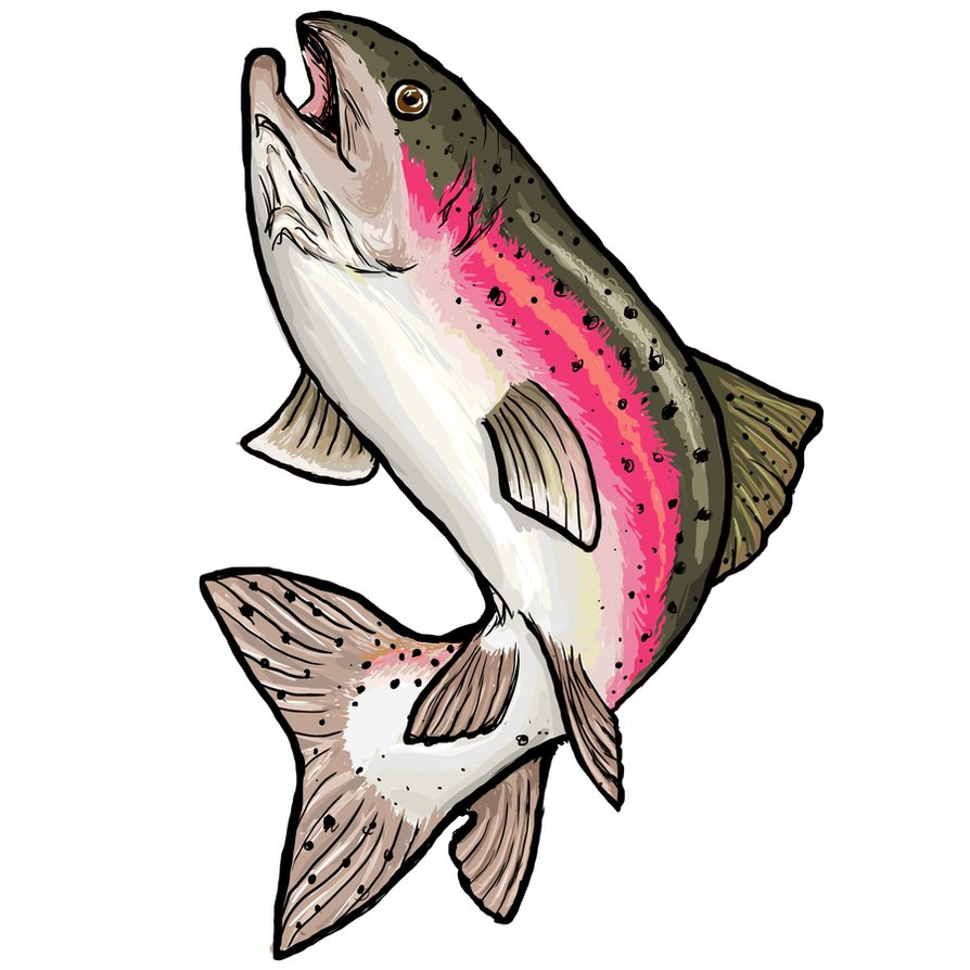 rainbow trout clip art clipart best Speckled Trout Clip Art brook trout clipart