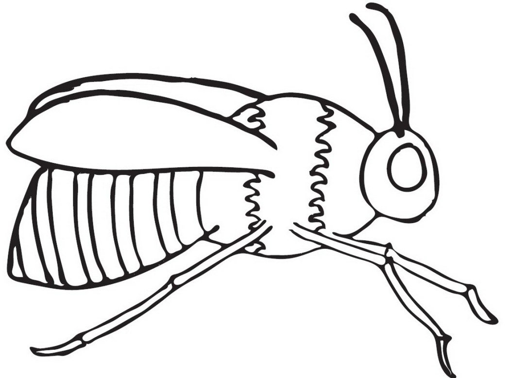 honey bees colouring in picture clipart best