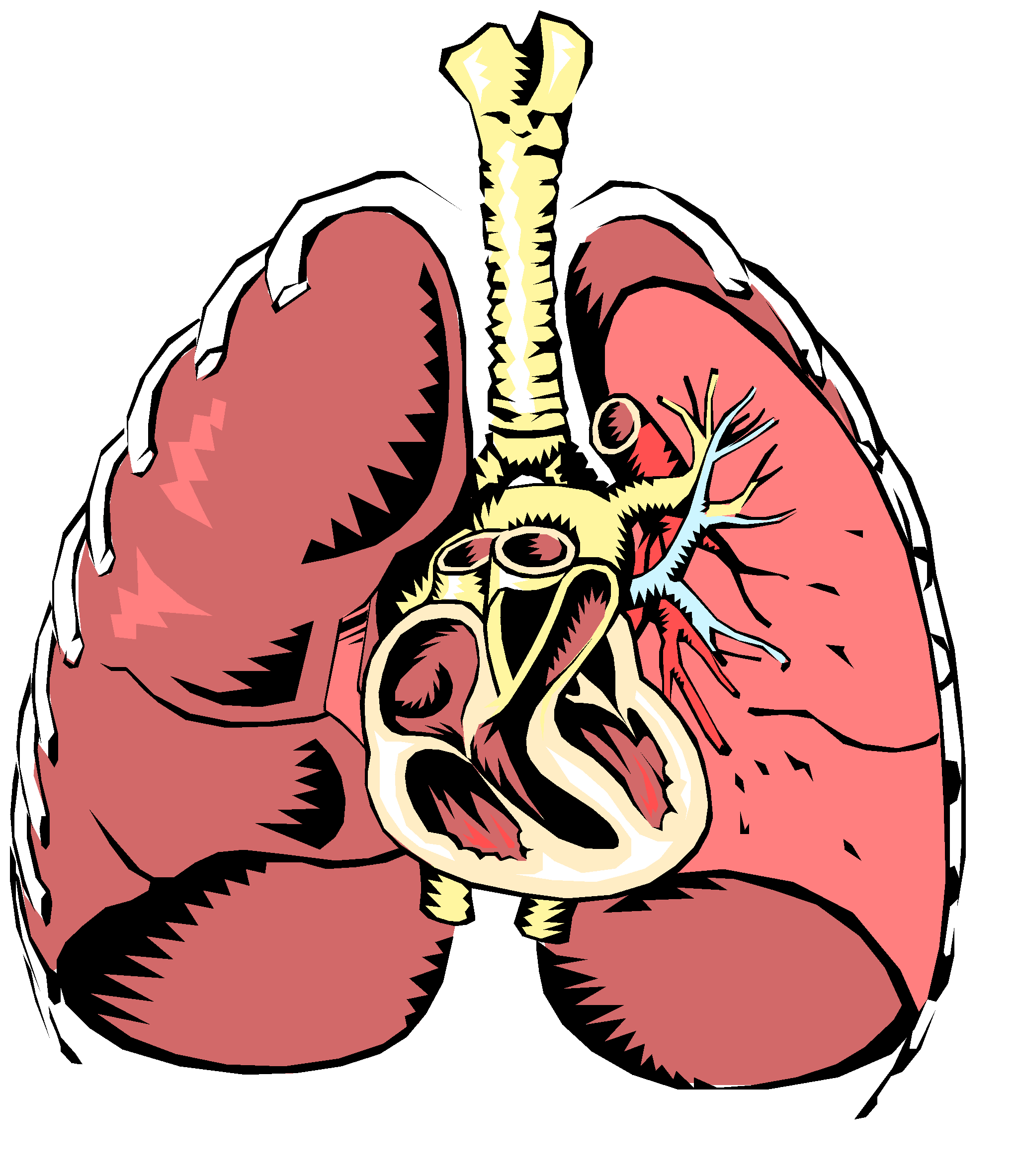 Respiratory System Cartoon Pictures - ClipArt Best