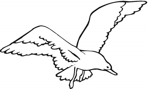 Seagulls coloring pages | Super Coloring