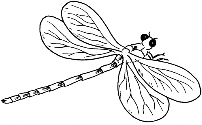 Dragonfly drawing template - photo#26
