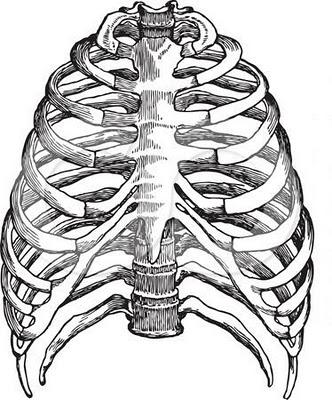 Anatomy: Human Skeleton Coloring, Human Heart Coloring, Pulmonary ...
