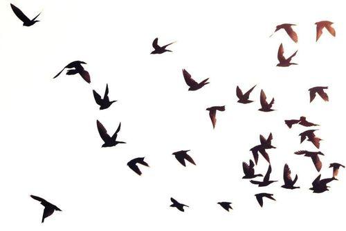 Bird in flight silhouette - photo#9