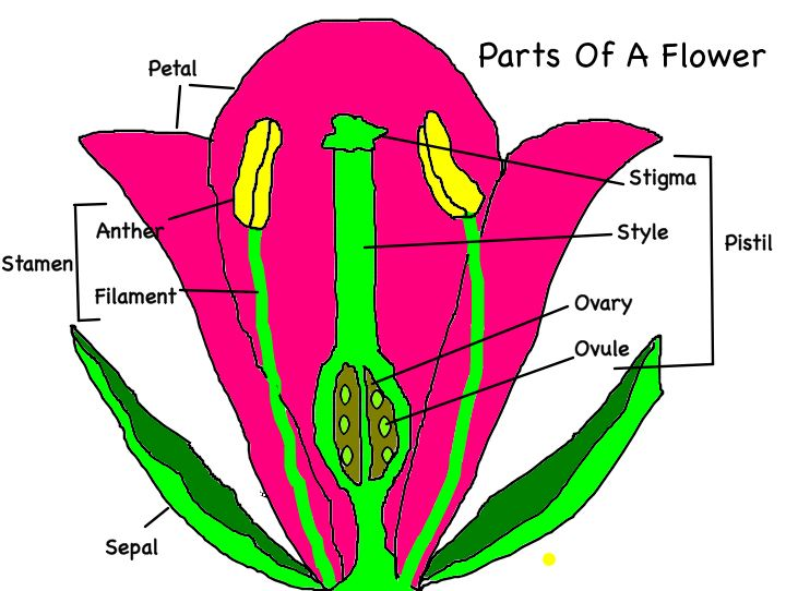 Cliparts Flowers
