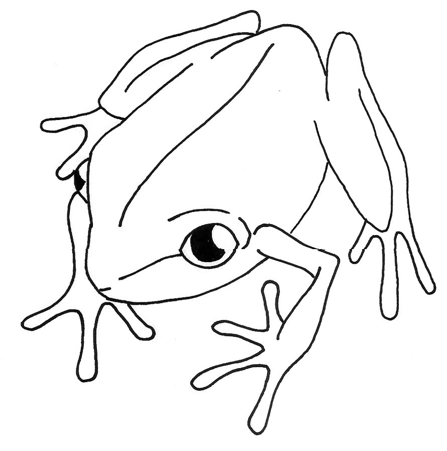 Line Art Of Animals : Simple line drawings of animals clipart best