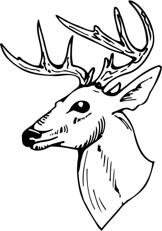Line Drawing Deer : Deer head line drawing clipart best