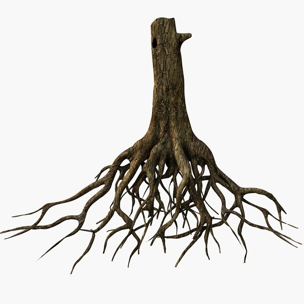 tree roots 3d model clipart best clipart best
