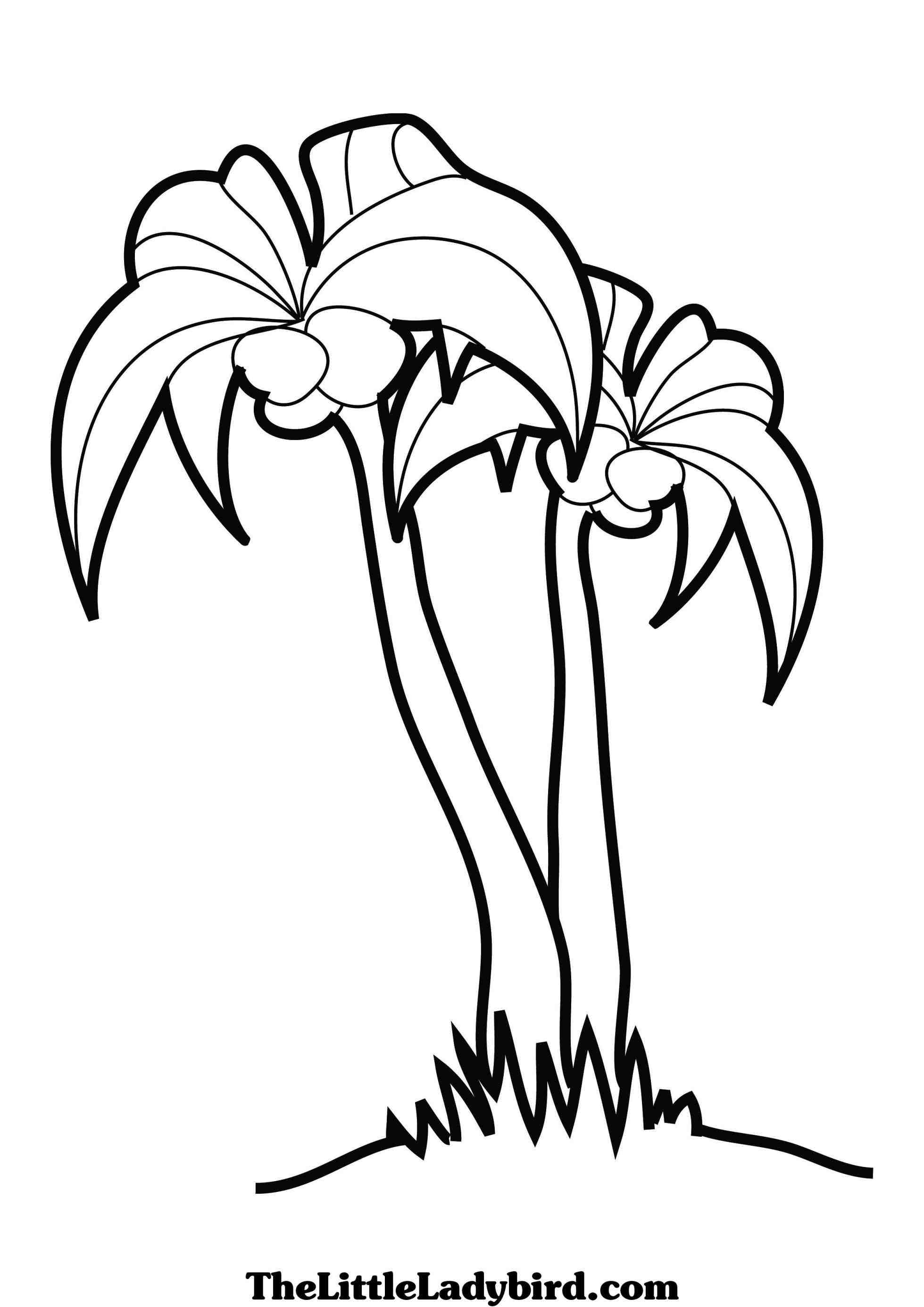 mango tree colouring pages clipart best
