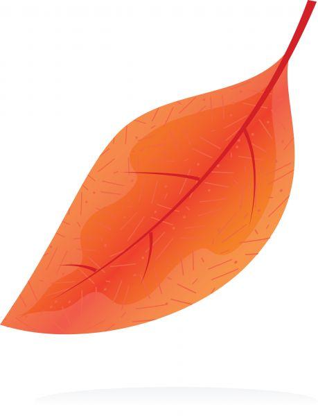 orange leaf clip art - photo #23