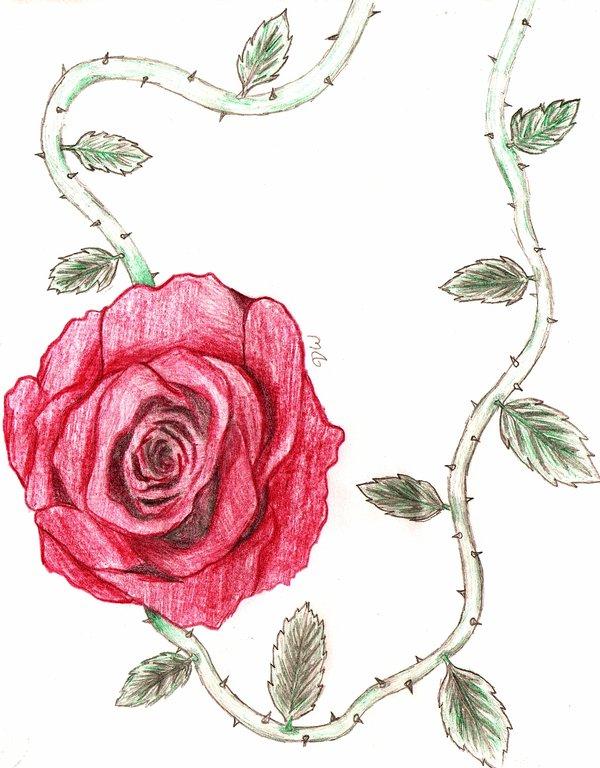 Rose Vines Drawings Rose Vine · Rose Vine