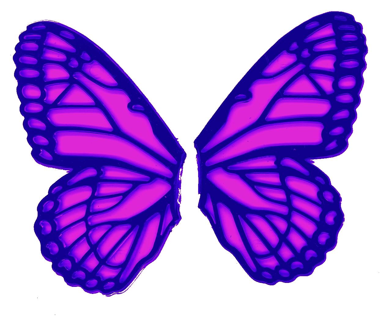 Butterfly Wing Art