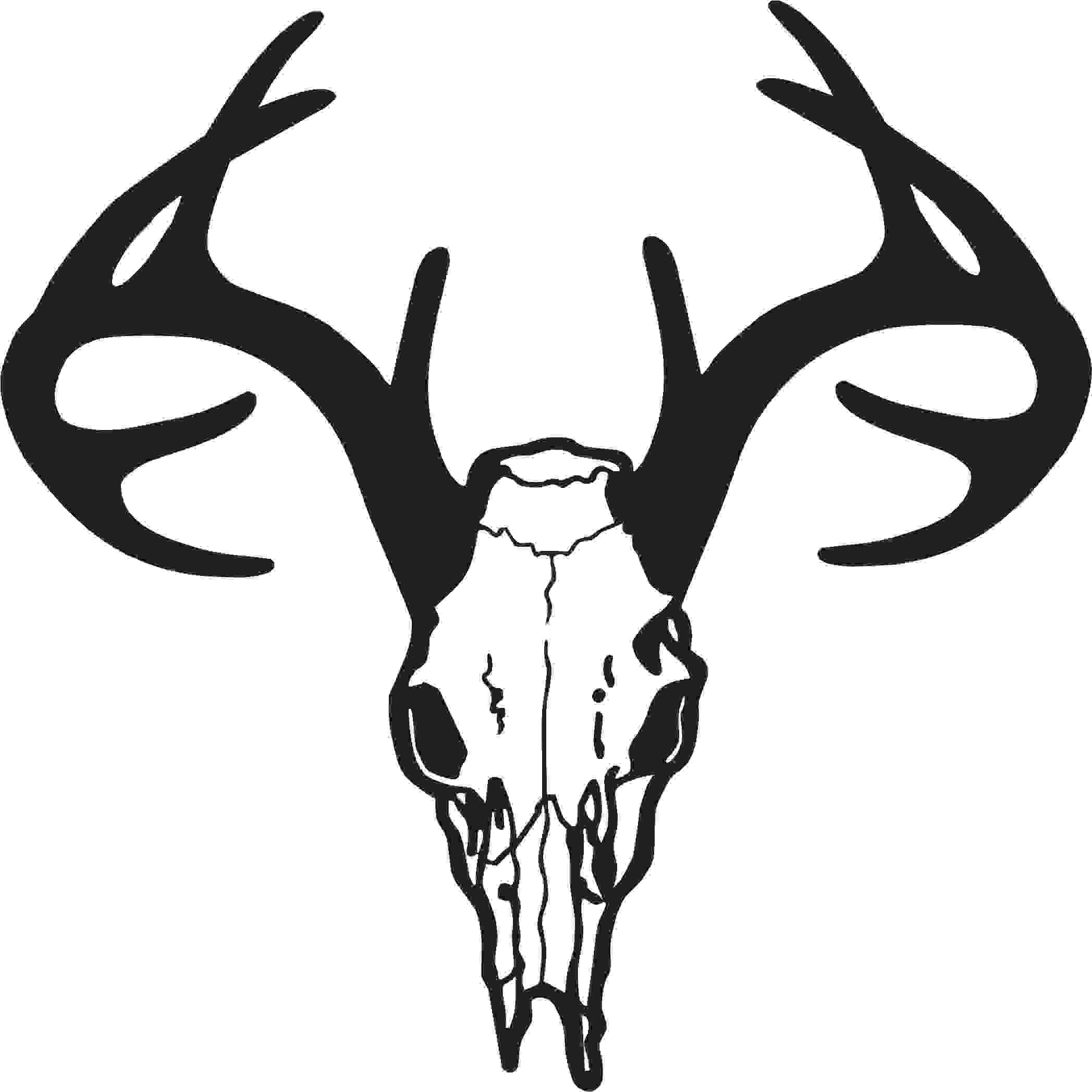 White Tail Deer Sckull Drawn: Buck Skull Outline