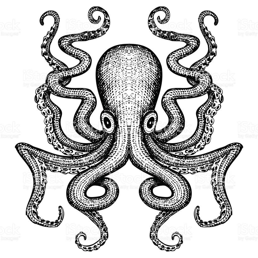 octopus illustration clipart best free octopus clipart clip art octopus free images chef