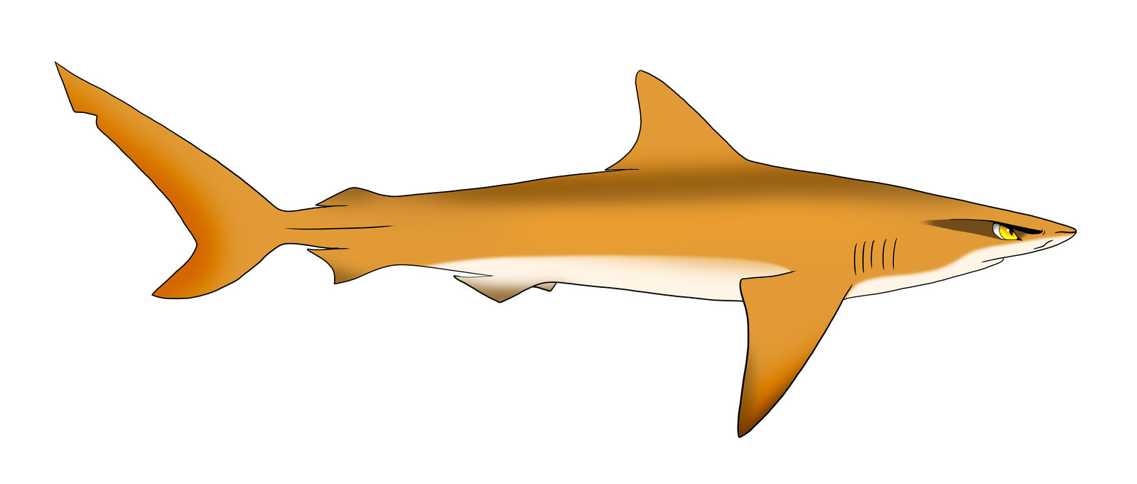 Pictures of drawn sharks Draw Shark. Basic Tutorial