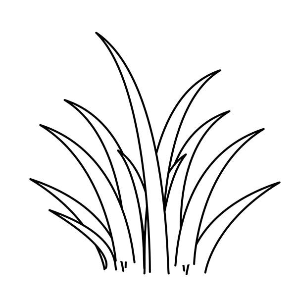 Line Drawing Grass : Grass drawing clipart best