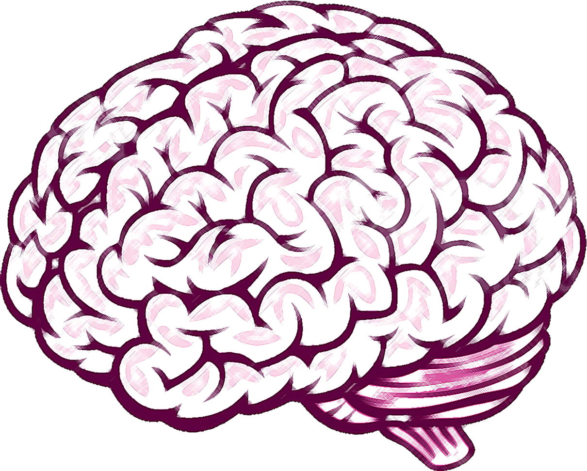 brain drawing clipart best