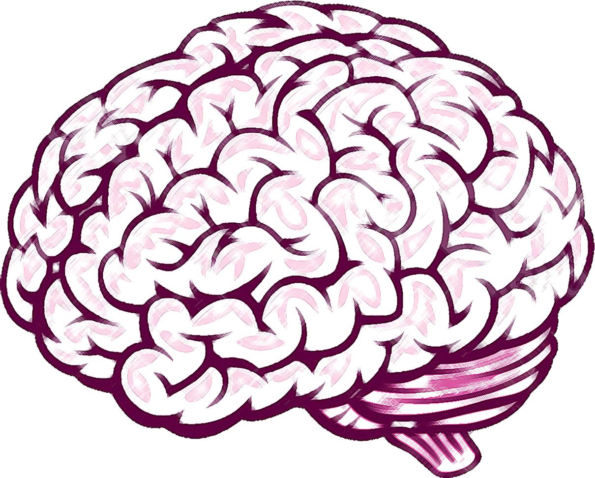 brain line drawing top - photo #24