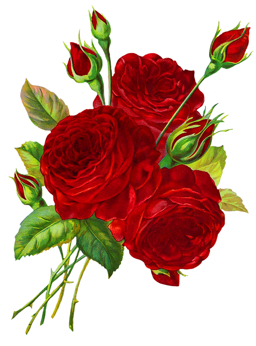 Red Roses Sketch Clipart Best