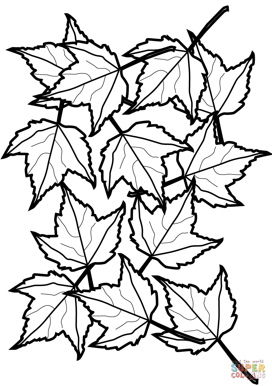 Maple Leaf Coloring