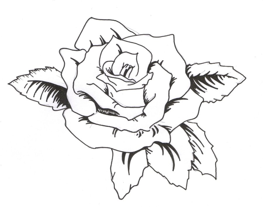Line Drawing Rose Tattoo : Tattoovorlage rose clipart best