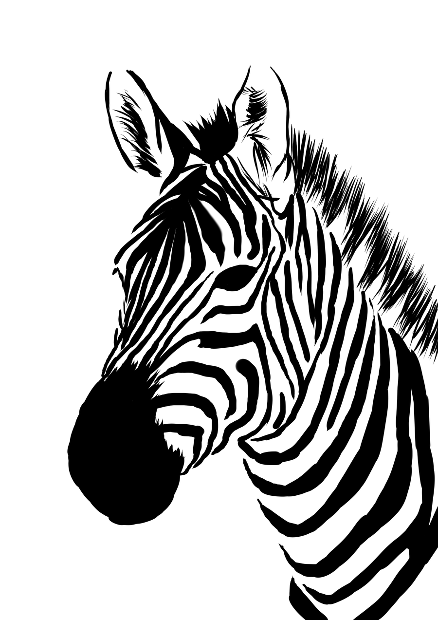 Zebra Line Drawing on Giraffe Coloring Pages