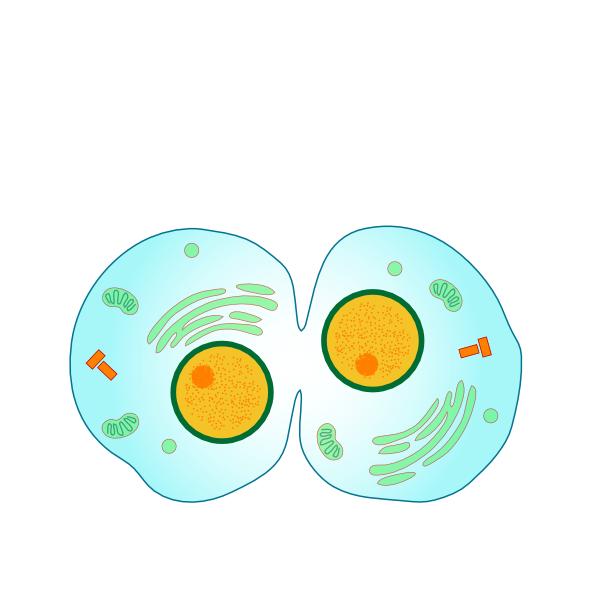 Animal Cell Diagram For Kids - ClipArt Best