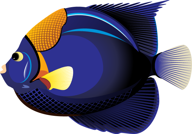 clipart picture of fish - photo #50