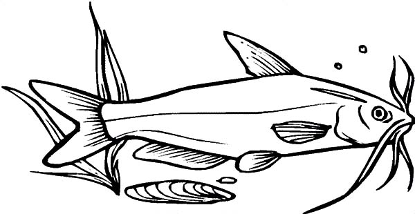 free coloring pages of catfish - photo#25