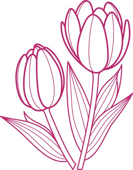 Tulips Drawing Outlines Tulip Outline Drawing