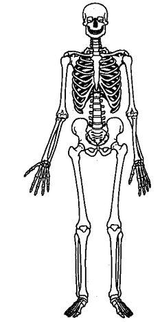 Blank Skeletal System Diagram - ClipArt Best