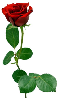 Single Red Rose Stem - ClipArt Best