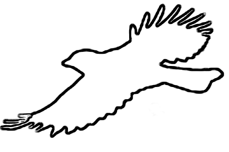 Outline Bird Drawings further 131638349663 further Free Duck Clipart Black And White also 511390612 likewise Bird Pictures Clip Art. on flying duck clip art