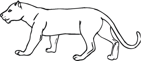 panther drawing outline - photo #23