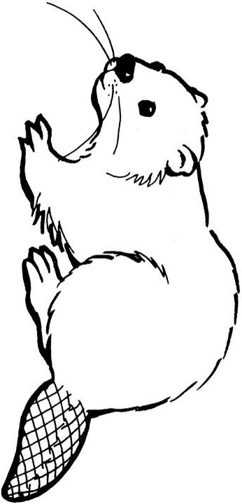 coloring pages of canadian animals - photo#31