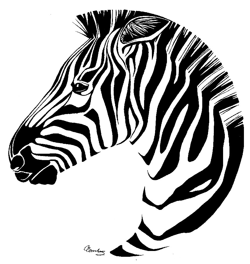 zebra outline drawing - photo #8