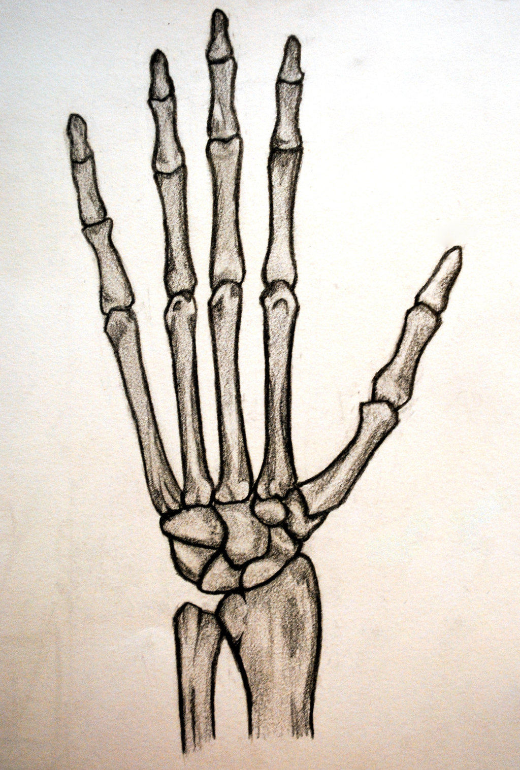 Skeleton Hand Drawing - ClipArt Best