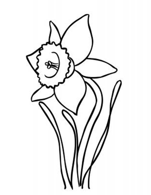Line Drawing Daffodil : Daffodil drawing outline imgkid the image kid
