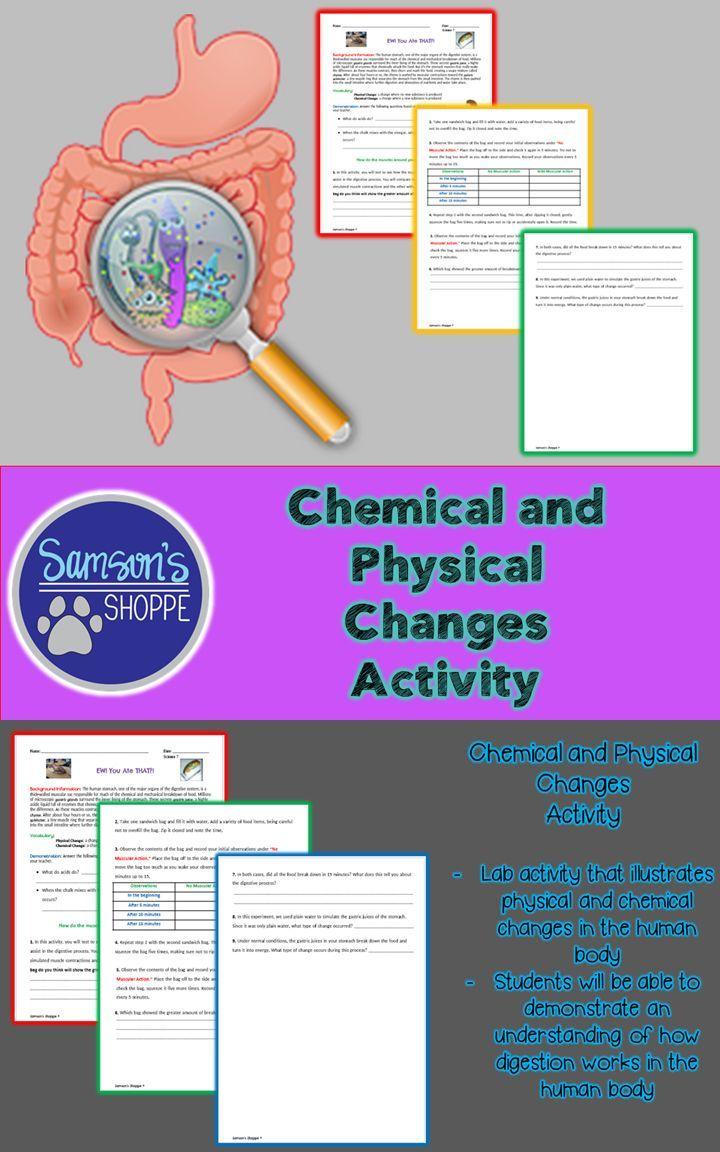 Digestive System Worksheet 5th Grade