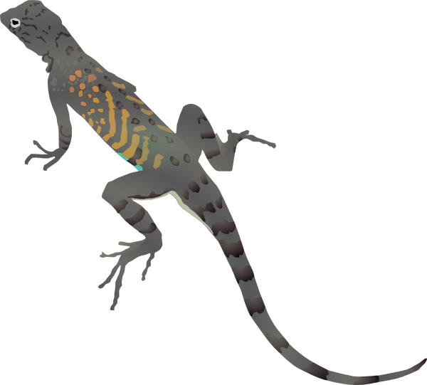Yellow Spotted Lizard Drawing Clipart Best