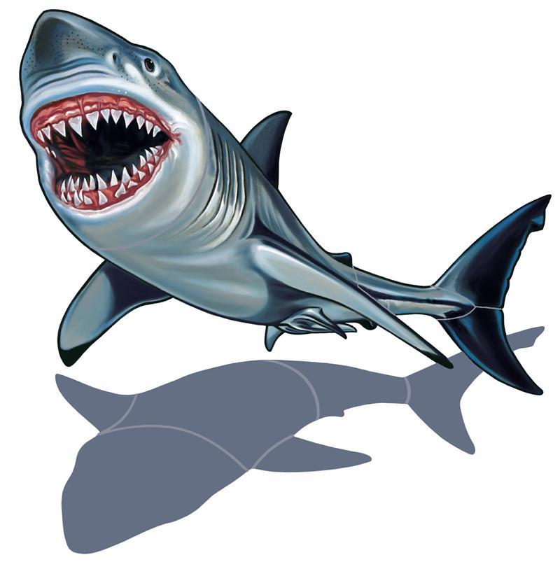 traditional hammerhead shark tattoos