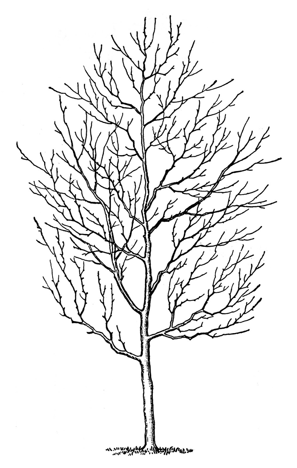 Tree No Leaves - ClipArt Best