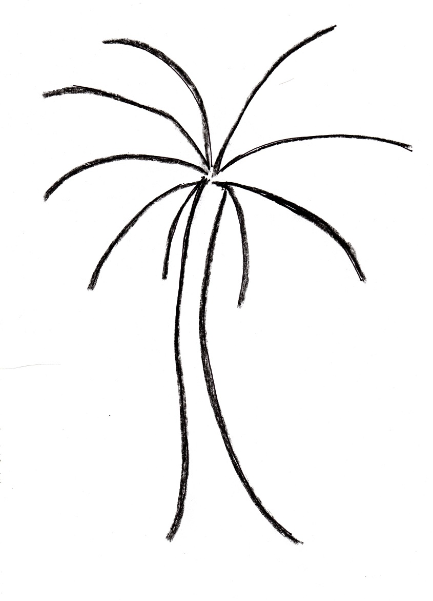 Line Art Of Trees : Palm tree line drawing clipart best