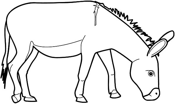 Pin Donkey Face Coloring Page On Pinterest