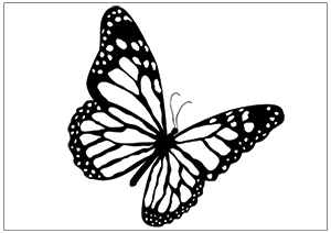Drawing Of Butterflies Flying - ClipArt Best