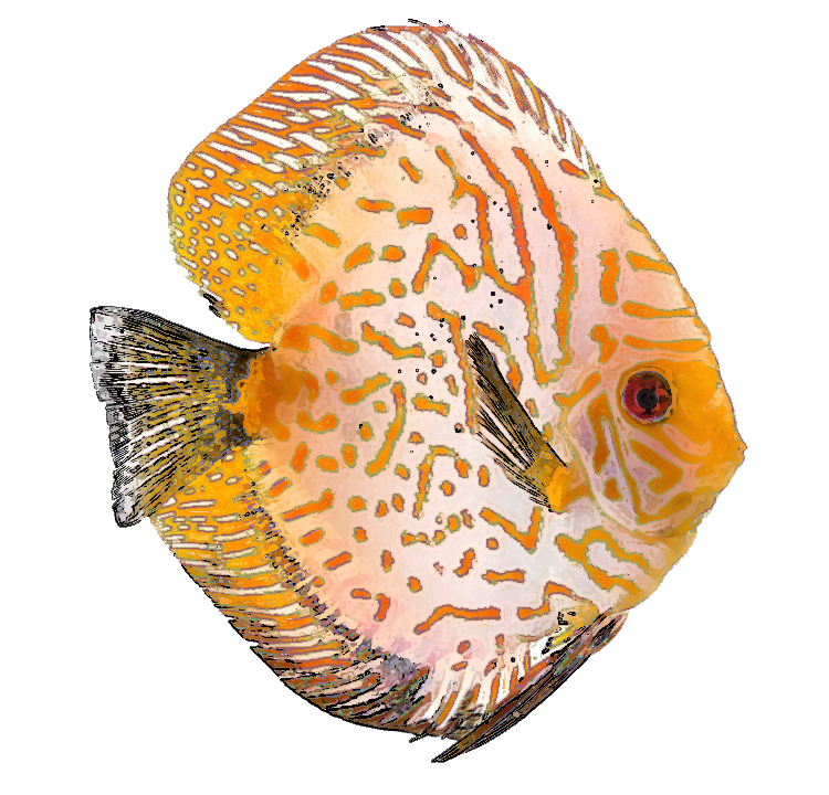 free clipart tropical fish - photo #46