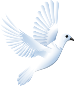 White Dove clip art - vector clip art online, royalty free ...